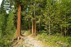 Het bos van Taiga royalty-vrije stock afbeeldingen