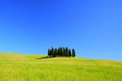 Het bos van Toscanië Stock Fotografie