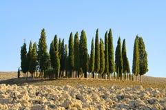 Het bos van Toscanië in daling royalty-vrije stock afbeelding