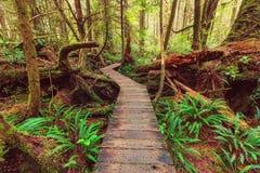 Het bos van Vancouver Royalty-vrije Stock Afbeeldingen