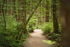 In het bos van Vreedzaam Geestpark, Vancouver, Brits Colombia Canada Stock Afbeelding