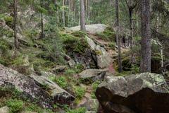 Het bos van het wildernislandschap met pijnboombomen en mos op rotsen Grote oude stenen stock foto
