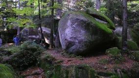 Het bos van het wildernislandschap oude klip en mos behandelde rotsen in het dramatische magische hout stock videobeelden