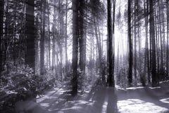 Het bos van Wonter Royalty-vrije Stock Foto