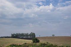 Het bos is verdwenen royalty-vrije stock afbeelding