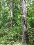 het bosbos van de hemeltakken van de Bladerenboom blauwe stock foto
