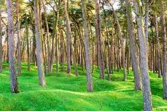 Het boshout en de kraters op slagveld van Vimy-rand royalty-vrije stock foto's