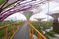 Het bosje Supertree bij Tuinen door de Baai Stock Afbeeldingen