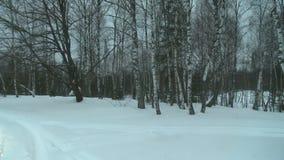 Het bosje van de de winterberk op een smerige koude dagmening stock videobeelden