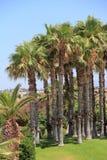 Het bosje van de palm Royalty-vrije Stock Foto's