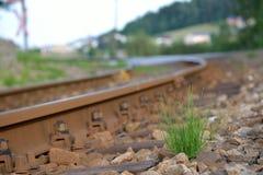 Het bosje van gras groeit naast spoorwegsporen Stock Afbeelding