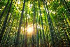Het Bosje van het Arashiyamabamboe stock foto