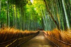 Het Bosje van het Arashiyamabamboe royalty-vrije stock foto's
