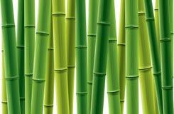 Het Bosje van het bamboe Stock Fotografie