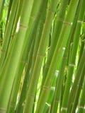 Het bosje van het bamboe. Royalty-vrije Stock Afbeeldingen