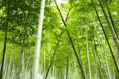 Het bosje van het bamboe in China Stock Afbeeldingen