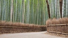 Het Bosje van het bamboe, Kyoto Stock Afbeeldingen