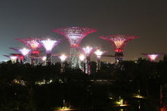 Het Bosje van nachtsupertree in Singapore Stock Fotografie