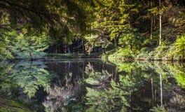 Het boslandschap van het de aard kalme landschap van het meerwild royalty-vrije stock foto