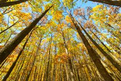 Het boslandschap van de herfst Stock Afbeeldingen