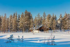 Het boslandschap van de het noordenwinter met grote bomen behandelde sneeuw Royalty-vrije Stock Foto's