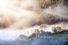 Het boslandschap van de ochtendmist Stock Foto