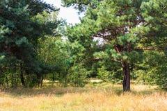 Het boslandschap van de open plek Royalty-vrije Stock Foto's