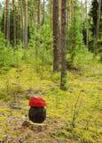 Het boslandschap van de pijnboom Royalty-vrije Stock Foto's