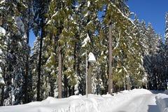 Het boslandschap van de de winterspar Sparrenboomstammen en takken met sneeuw worden behandeld die Royalty-vrije Stock Fotografie