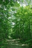 Het boslandschap van de zomer Stock Foto