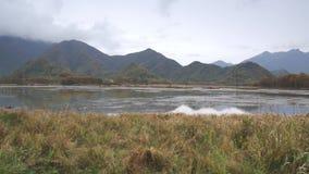 Het Boslandschap van Hubeishennongjia stock video