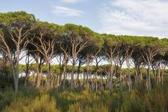 Het boslandschap van Toscanië Stock Afbeeldingen