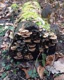 Het bosleven Stock Afbeeldingen