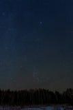 Het bospanorama van de hemelster Royalty-vrije Stock Foto
