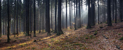 Het bospanorama van de herfst Stock Afbeelding