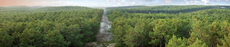 Het bospanorama van de pijnboom Royalty-vrije Stock Foto's