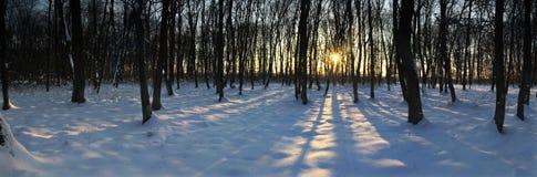 Het bospanorama van de winter bij zonsondergang Royalty-vrije Stock Fotografie