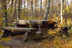 Het bospark van de herfst. Stock Foto