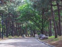 Het bospark van de pijnboomboom Stock Afbeelding