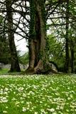 Het bospark van Portumna royalty-vrije stock foto