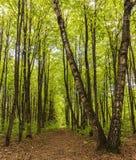 Het bosweglandschap op een zonnige dag van de de lentezomer met gras levende bomen en de groene bladeren bij takken bij een botan royalty-vrije stock afbeelding