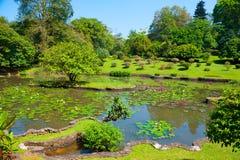 Het botanische landschap van de Tuin Stock Afbeeldingen