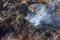 Het branden stomend droog gras Royalty-vrije Stock Afbeelding