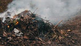 Het branden van droge bladeren met rook ecologische crisisfoto stock footage