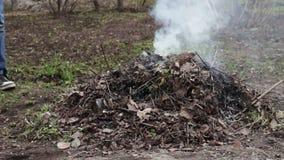 Het branden van droge bladeren met rook ecologische crisisfoto stock videobeelden