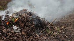 Het branden van droge bladeren met rook, milieuvervuiling stock videobeelden