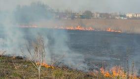 Het branden van droog gras in het bos stock video