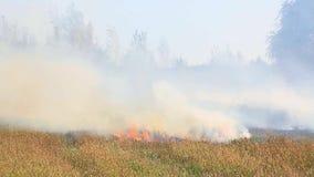 Het branden van droog gras op het gebied stock footage