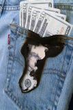 Het branden van een gat in mijn zak 2 Stock Foto