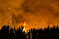 Het branden van het suikerriet Royalty-vrije Stock Afbeeldingen